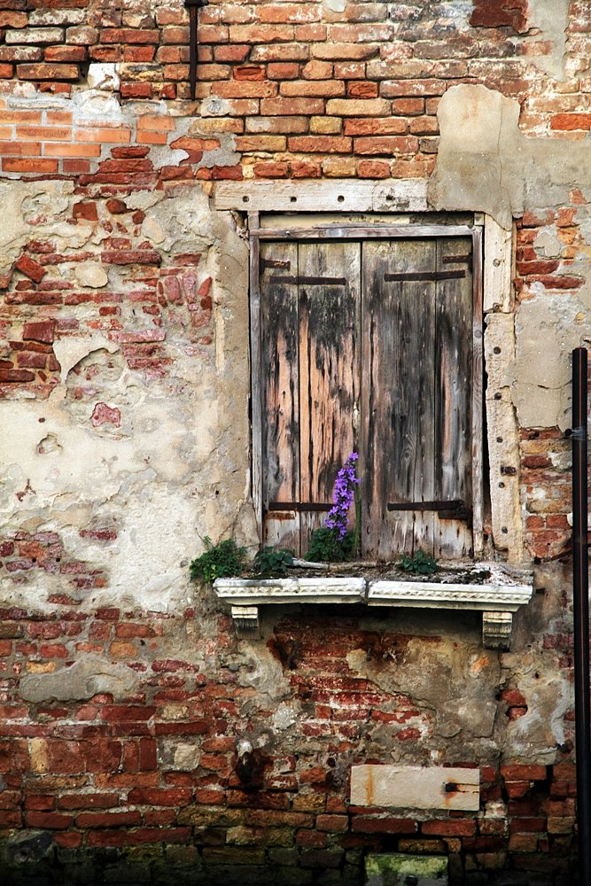 Life can be growth even in the edge of a window.