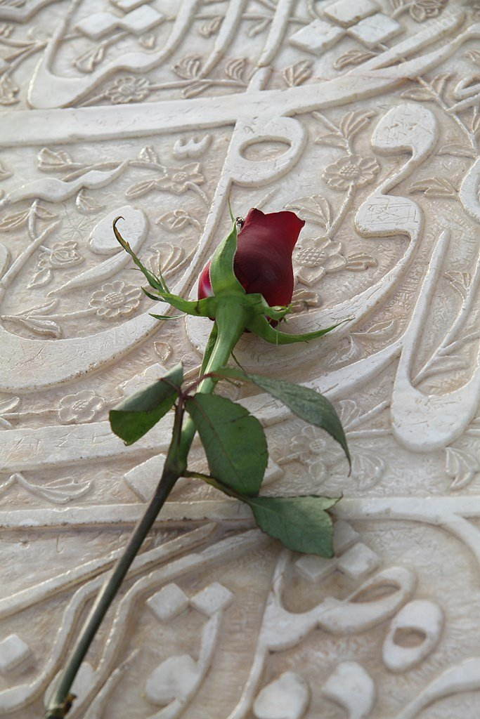 Every day a red rose is left on tomb of Hafez in Shira.z