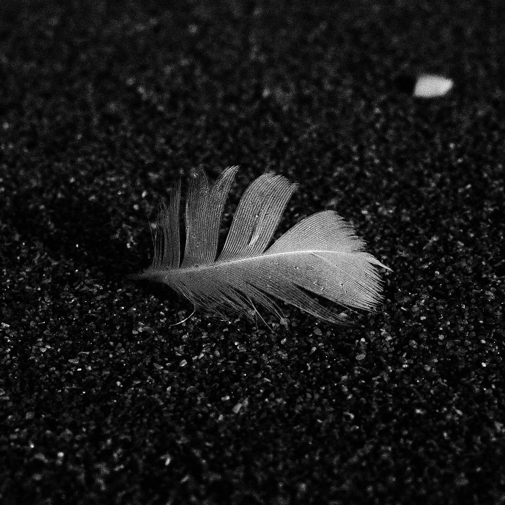Feather.